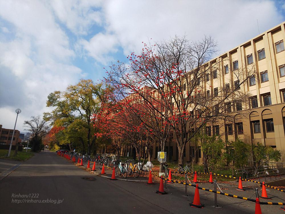 2019.11.9 北海道大学を散策♬_f0250322_21104998.jpg