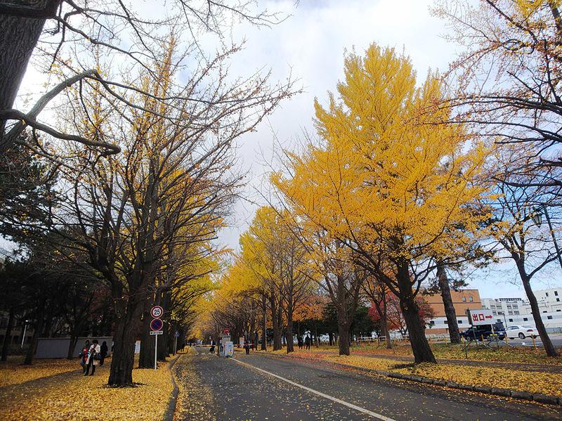 2019.11.9 北海道大学を散策♬_f0250322_2193696.jpg