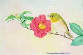 #自然画 『目白・山茶花』 Zosterops japonicus_a0083553_7432176.jpg