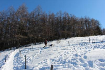 お山へハイキング〜④元旦編_e0293553_18143768.jpg