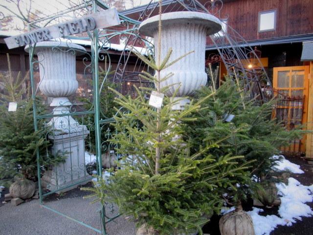 追分・FLOWER FIELD Gardens * お正月用のお花も雑貨もお買い得♪_f0236260_18313647.jpg