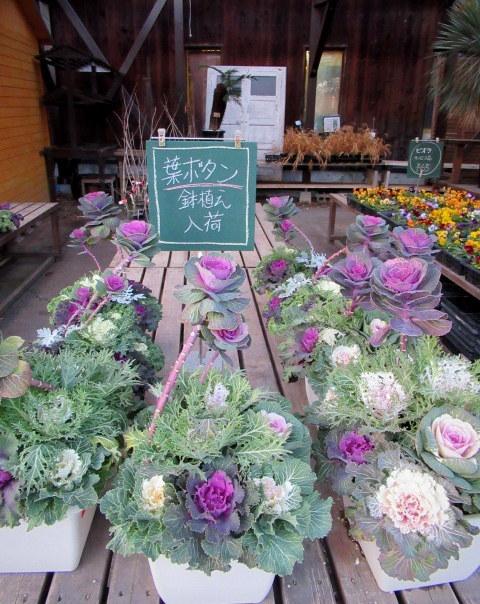 追分・FLOWER FIELD Gardens * お正月用のお花も雑貨もお買い得♪_f0236260_18315594.jpg