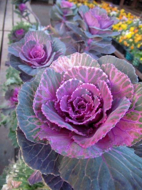 追分・FLOWER FIELD Gardens * お正月用のお花も雑貨もお買い得♪_f0236260_18322327.jpg