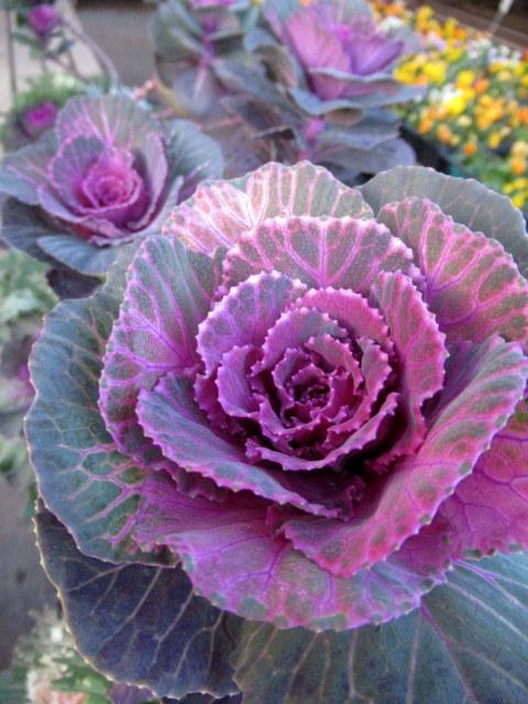 追分・FLOWER FIELD Gardens * お正月用のお花も雑貨もお買い得♪_f0236260_18324193.jpg