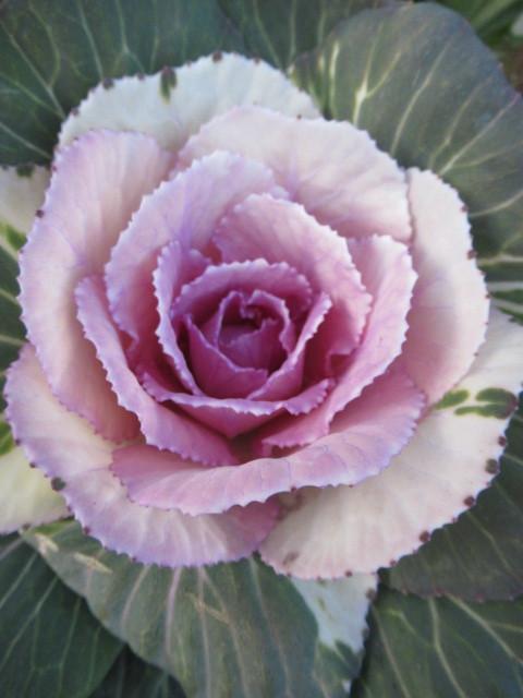 追分・FLOWER FIELD Gardens * お正月用のお花も雑貨もお買い得♪_f0236260_18330631.jpg