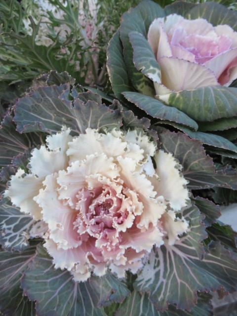 追分・FLOWER FIELD Gardens * お正月用のお花も雑貨もお買い得♪_f0236260_18332691.jpg