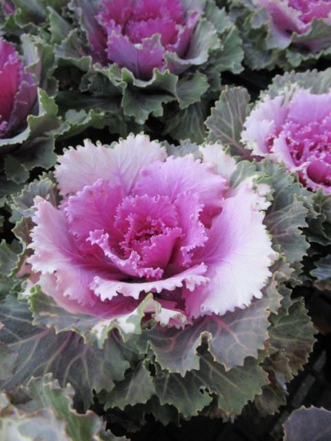 追分・FLOWER FIELD Gardens * お正月用のお花も雑貨もお買い得♪_f0236260_18340360.jpg