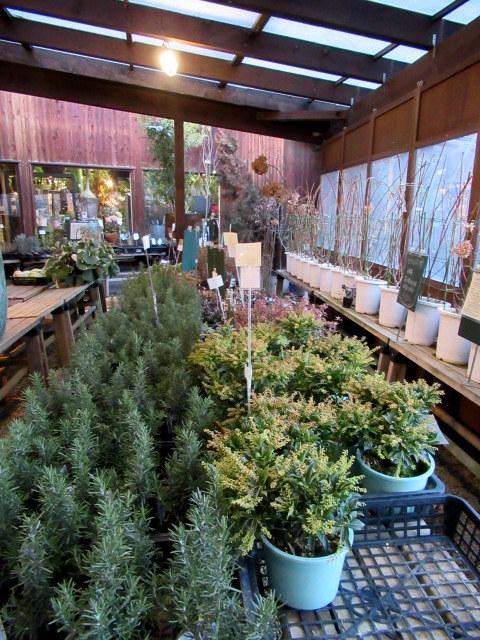 追分・FLOWER FIELD Gardens * お正月用のお花も雑貨もお買い得♪_f0236260_18385505.jpg