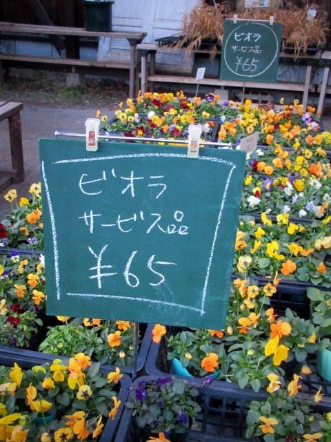 追分・FLOWER FIELD Gardens * お正月用のお花も雑貨もお買い得♪_f0236260_18461532.jpg