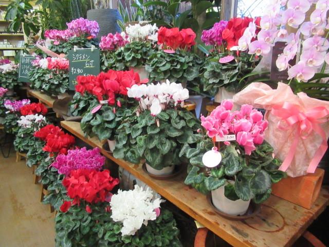 追分・FLOWER FIELD Gardens * お正月用のお花も雑貨もお買い得♪_f0236260_18464315.jpg