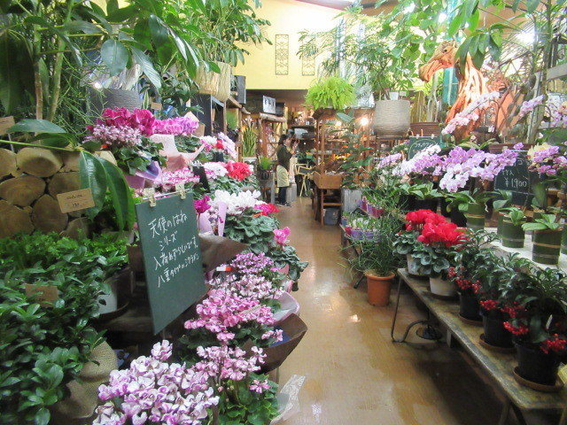 追分・FLOWER FIELD Gardens * お正月用のお花も雑貨もお買い得♪_f0236260_18474999.jpg