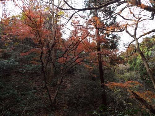 友人と鎌倉で見たこと_f0211178_17230258.jpg