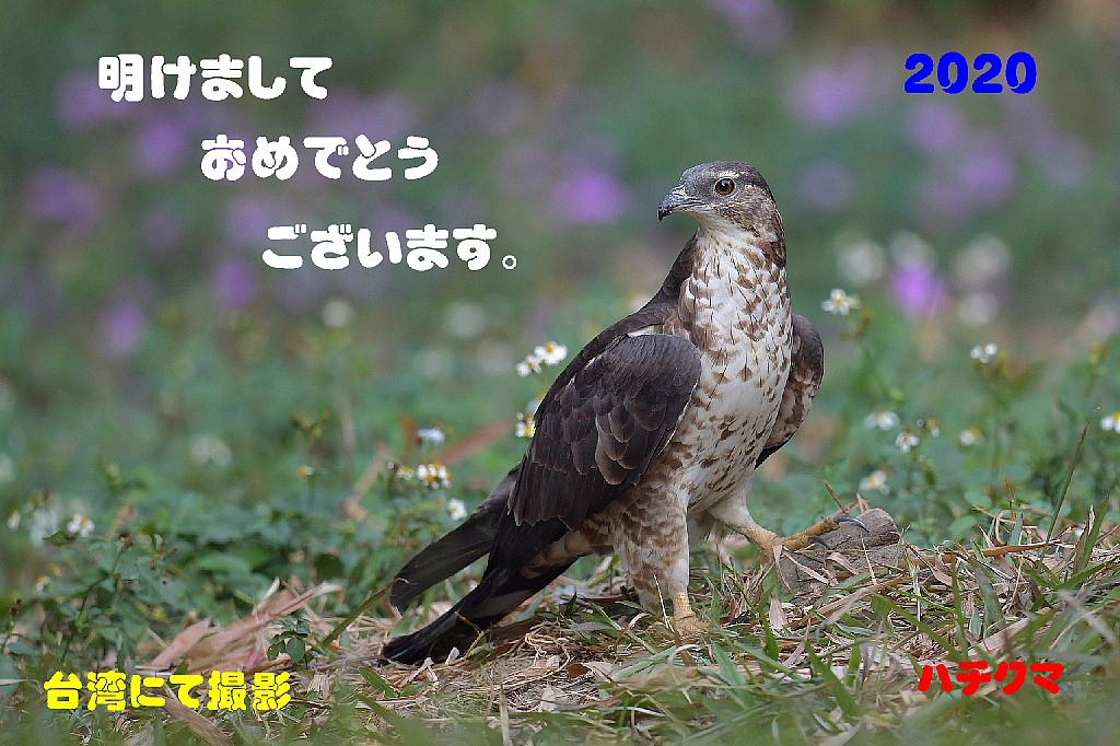 謹賀新年_f0059882_5351099.jpg