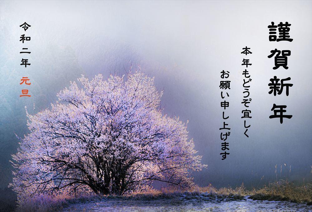 新年のご挨拶_b0074098_01590116.jpg