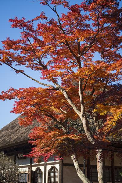 北鎌倉の紅葉2019 明月院 長寿寺 円覚寺_b0145398_23001692.jpg