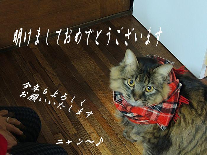 あけましておめでとうございます・゚☆、・:`☆・・゚・゚☆。_c0067206_13584043.jpg