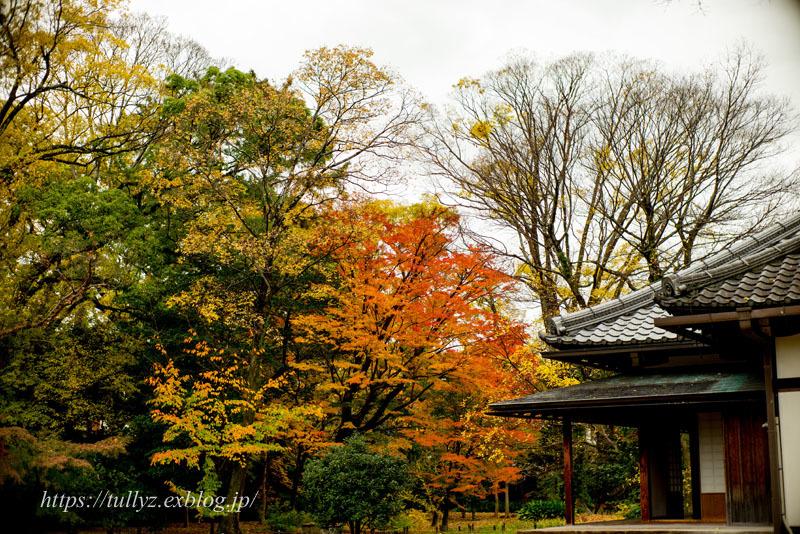 京都の秋2019(29)_d0108132_18341057.jpg