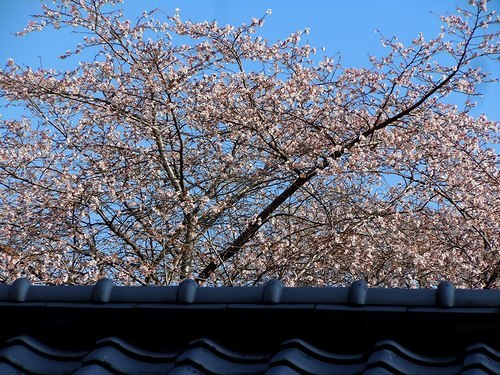 路傍の花、樹々の鳥(361) ~ 新春に咲く ~_b0102572_15315550.jpg