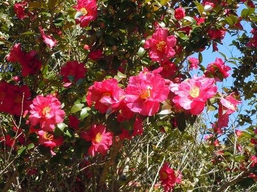 路傍の花、樹々の鳥(361) ~ 新春に咲く ~_b0102572_15321805.jpg