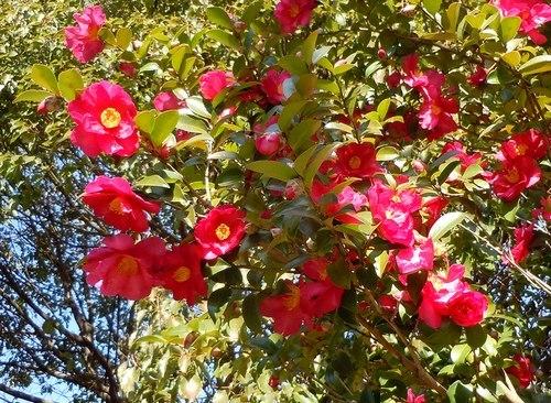 路傍の花、樹々の鳥(361) ~ 新春に咲く ~_b0102572_15324315.jpg