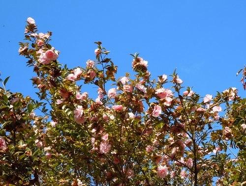 路傍の花、樹々の鳥(361) ~ 新春に咲く ~_b0102572_15331749.jpg