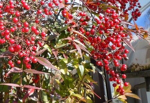 路傍の花、樹々の鳥(362) ~ こいつは春から ・・・ ~_b0102572_15340496.jpg