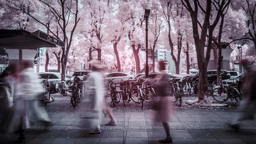 街路樹が白化し発狂した正月の都心_d0353489_21465053.jpg