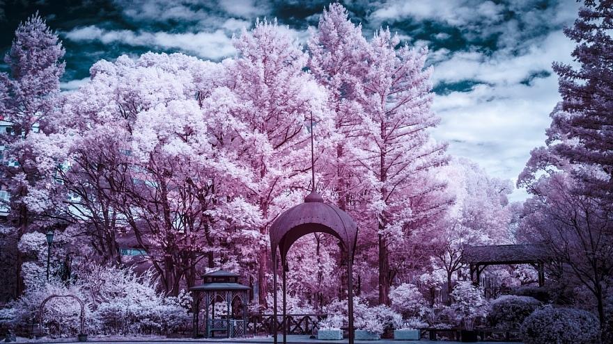 発狂系の雪が降った都市公園_d0353489_22101660.jpg