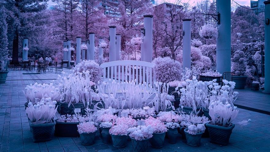発狂系の雪が降った都市公園_d0353489_22102797.jpg