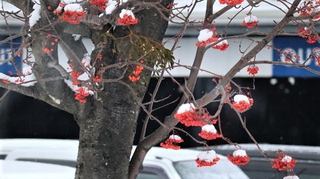 青森駅は還暦を迎えました。そして、大改装中です。青い森鉄道と雪景色、雪の中を激走する貨物列車とモーリーくん_d0181492_23445365.jpg