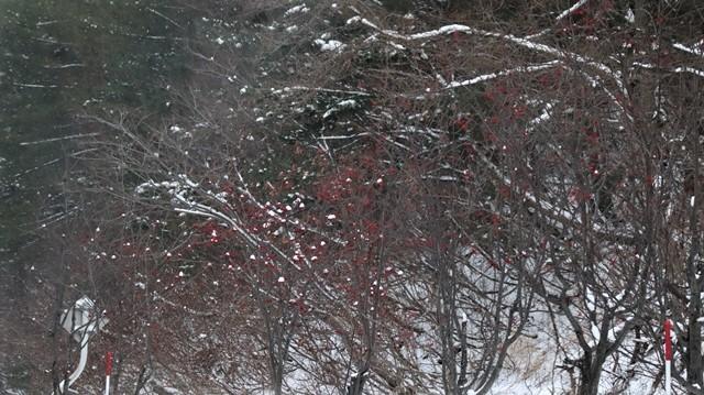 青森駅は還暦を迎えました。そして、大改装中です。青い森鉄道と雪景色、雪の中を激走する貨物列車とモーリーくん_d0181492_23450170.jpg