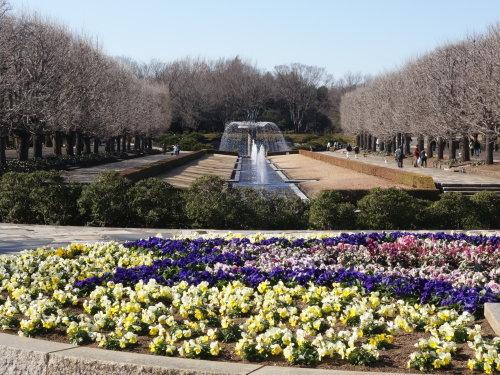 長い散歩@昭和記念公園_b0254207_19175043.jpg