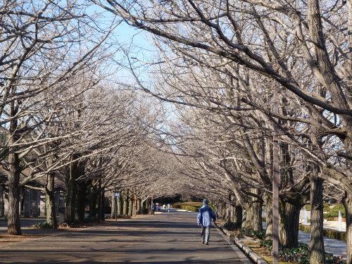 長い散歩@昭和記念公園_b0254207_19175998.jpg