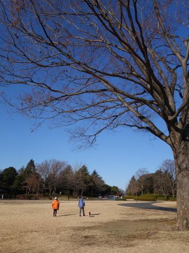 長い散歩@昭和記念公園_b0254207_19181093.jpg