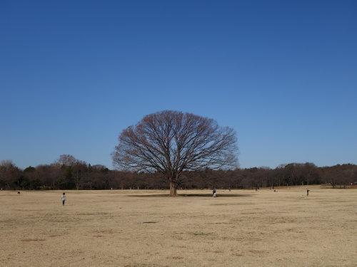 長い散歩@昭和記念公園_b0254207_19181602.jpg