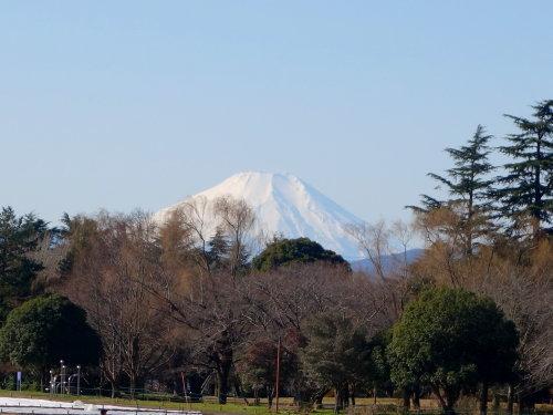 長い散歩@昭和記念公園_b0254207_19185082.jpg