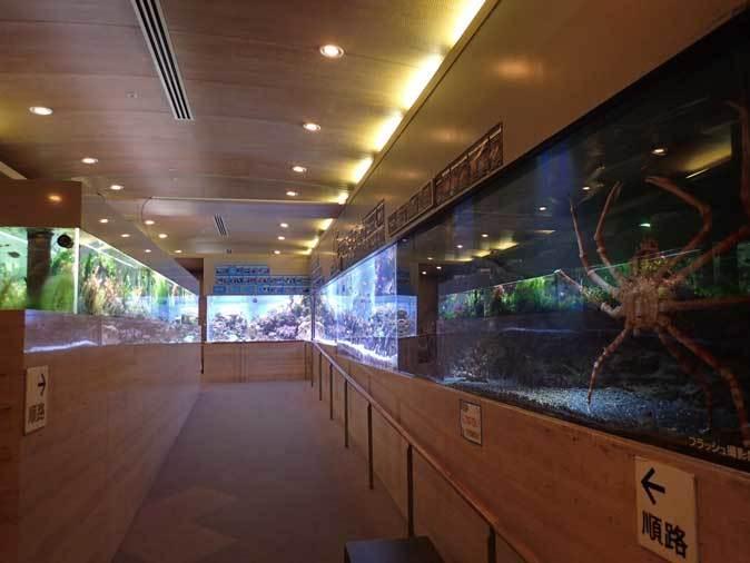 板橋区立熱帯環境植物館へ行って来ました!_b0355317_14023085.jpg