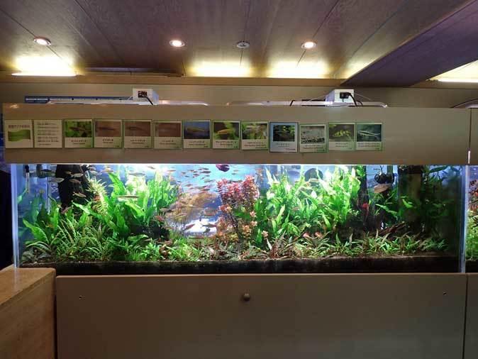 板橋区立熱帯環境植物館へ行って来ました!_b0355317_14040061.jpg
