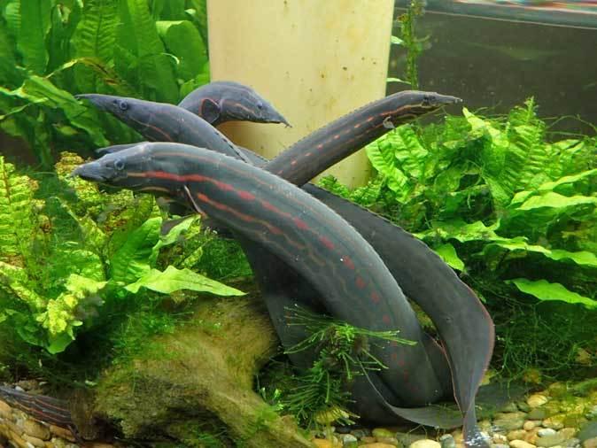 板橋区立熱帯環境植物館へ行って来ました!_b0355317_14045357.jpg