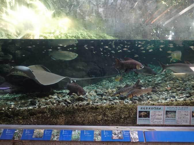 板橋区立熱帯環境植物館へ行って来ました!_b0355317_14071465.jpg