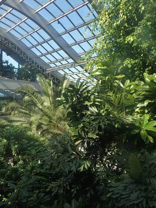 板橋区立熱帯環境植物館へ行って来ました!_b0355317_14104798.jpg