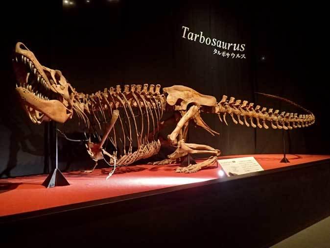 恐竜博2019~タルボサウルス、アンセリミムス、テリジノサウルス類_b0355317_18400192.jpg