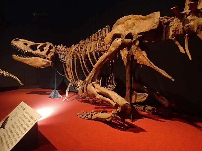 恐竜博2019~タルボサウルス、アンセリミムス、テリジノサウルス類_b0355317_18521282.jpg