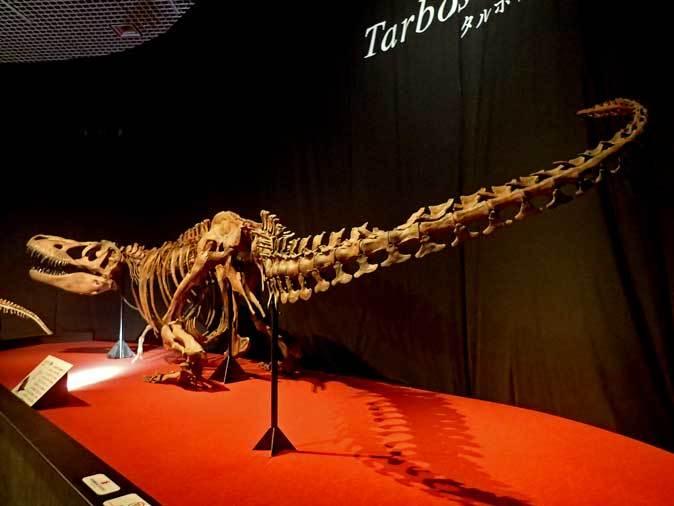 恐竜博2019~タルボサウルス、アンセリミムス、テリジノサウルス類_b0355317_18535559.jpg