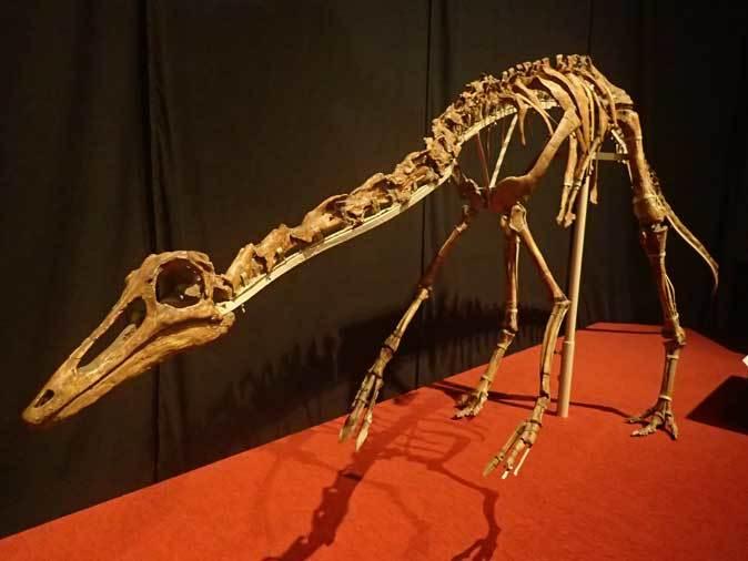 恐竜博2019~タルボサウルス、アンセリミムス、テリジノサウルス類_b0355317_18544885.jpg