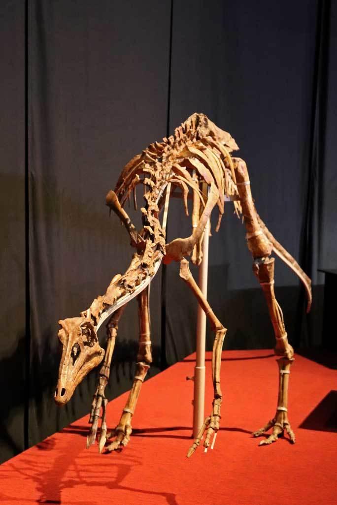 恐竜博2019~タルボサウルス、アンセリミムス、テリジノサウルス類_b0355317_19005068.jpg