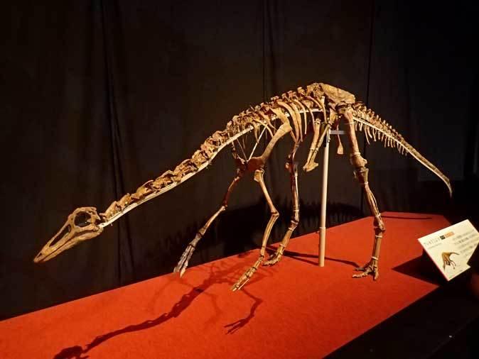 恐竜博2019~タルボサウルス、アンセリミムス、テリジノサウルス類_b0355317_19132567.jpg
