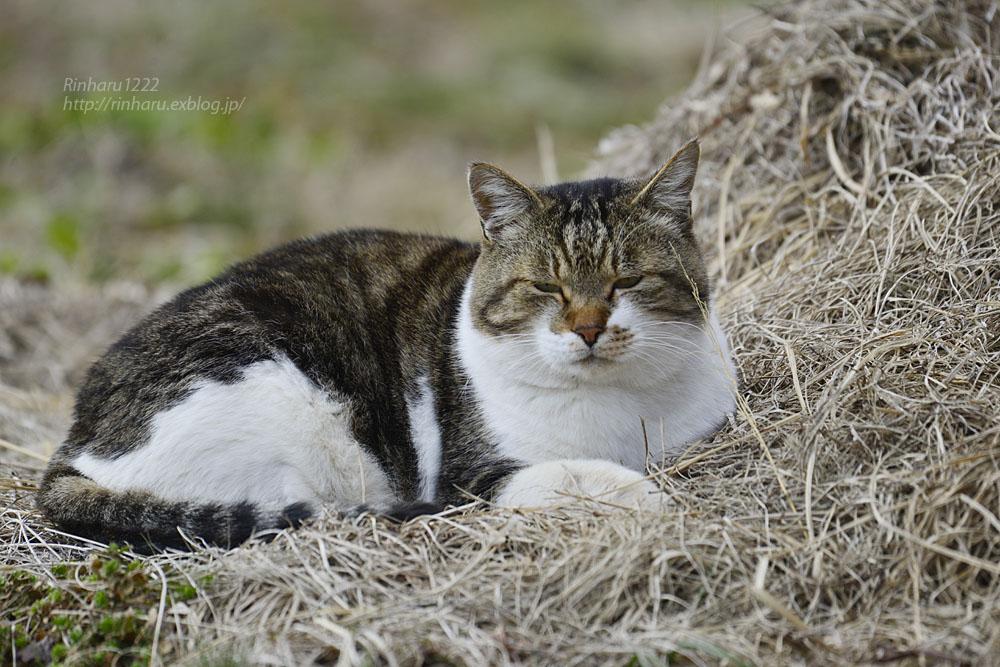 2020.1.3 我が家の猫たち(とらたろう、まお、ましゅう、くぅ) 【Cats】_f0250322_1953527.jpg