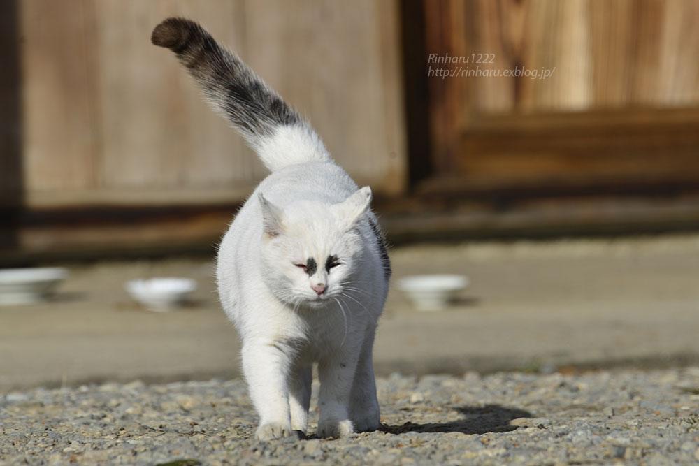 2020.1.3 我が家の猫たち(とらたろう、まお、ましゅう、くぅ) 【Cats】_f0250322_1954354.jpg