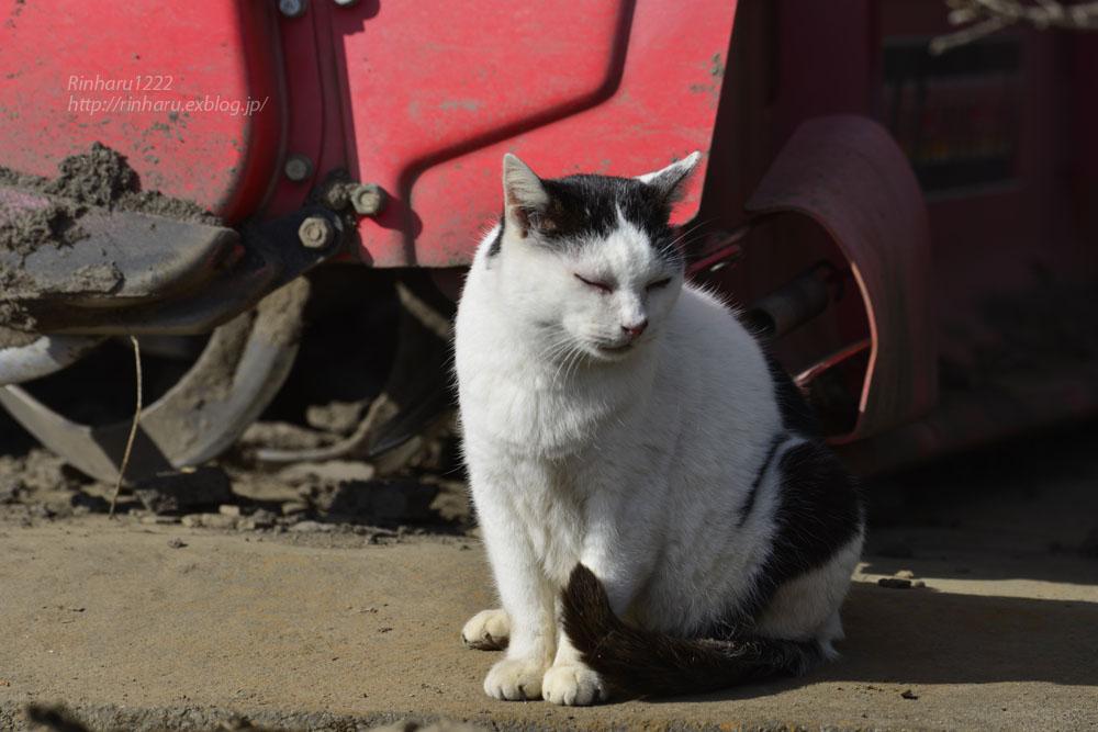 2020.1.3 我が家の猫たち(とらたろう、まお、ましゅう、くぅ) 【Cats】_f0250322_19544261.jpg
